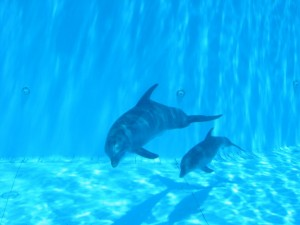 Anne yunus ve yavrusu / dolphins-world