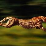 En hızlı hayvan hangisdir?