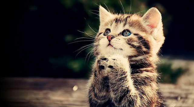 kediler-hakkinda-ilginc-bilgiler