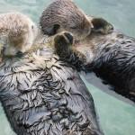 Hayvanlarla ilgili ilginç bilgiler