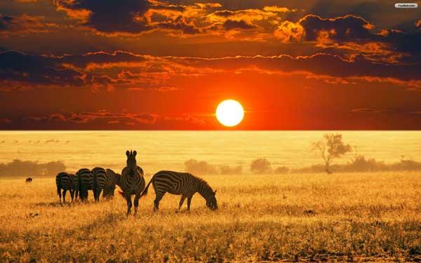 Afrika Hakkında Bilinmeyenler