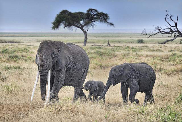 Filler Hakkında İlginç Bilgiler