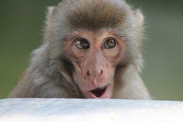 Maymunlar Hakkında Bilinmeyenler