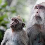 Maymunlar Hakkında İlginç Bilgiler