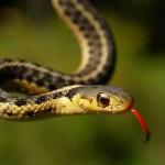 Yılanlar Hakkında İlginç Bilgiler
