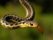 Yılanlar Hakkında Bilgi