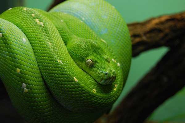 Yılanlar hakkında ilginç bilgiler