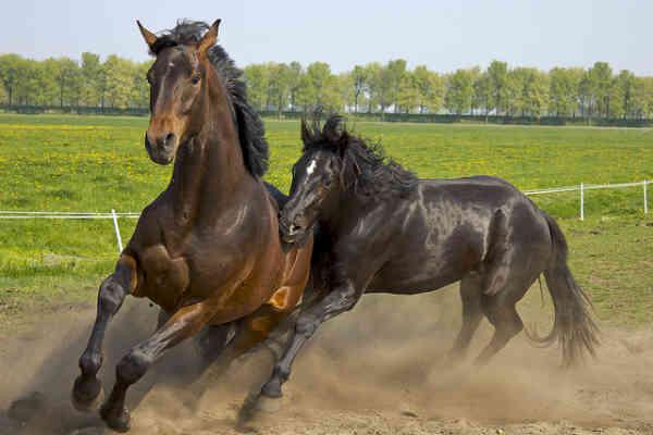 Atlar Hakkında Bilmedikleriniz