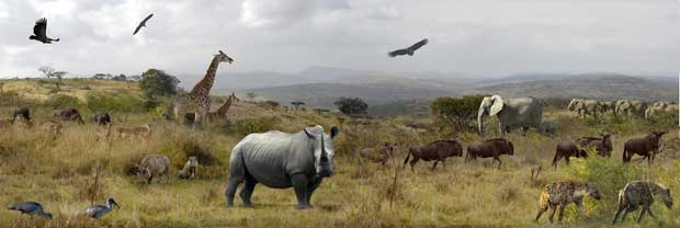 Foto: Naturalhistoryexplorer.com