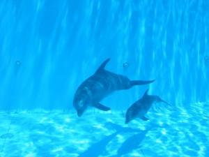Anne yunus ve yavrusu / dolphins-world