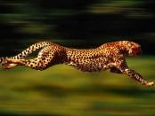 dünyanın en hızlı hayvani