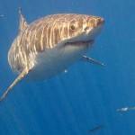 Köpek balığı hakkında bilmedikleriniz