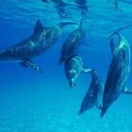 Yunuslar Hakkında İlginç Bilgiler