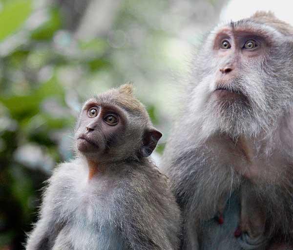 Maymunlar Hakkında Bilmedikleriniz
