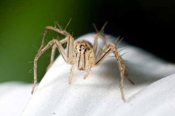 Örümcekler Hakkında Bilinmeyenler