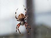 Örümcekler Hakkında İlginç Bilgiler