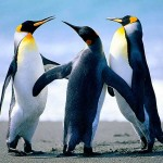 Penguenler Hakkında İlginç Bilgiler