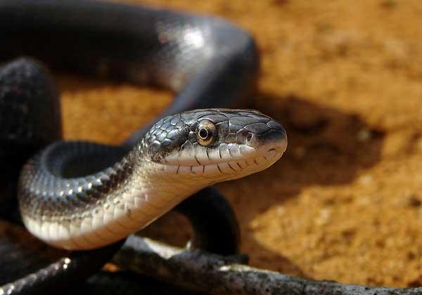 Yılanlar Hakkında Bilmedikleirniz